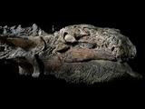 Рабочий случайно обнаружил удивительный артефакт, скрытый миллионы лет