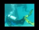 Дайвинг_с_акулами_в_Красном_море__Индийском_океане....Diving_with_sharks..mp4