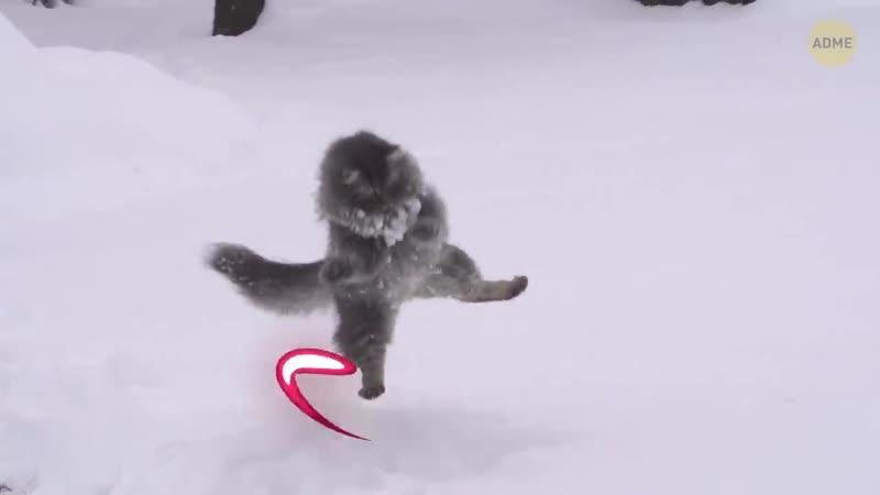 Интересное видео №70 - 11 надежных способов досадить коту