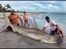Парень поймал огромную акулу молот Но в центре внимания оказалась далеко не рыба