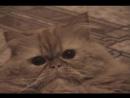 Homevideo_Кот-Колоброд