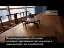 Робот-садовник помогает ухаживать за комнатными растениями