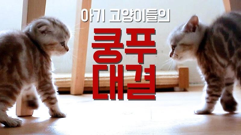 쿵푸하는 고양이들 Kung fu kittens duel [SURINOEL수리노을]