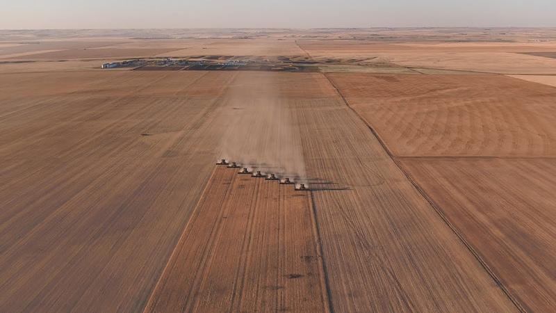 Chickpea Harvest 2017 Monette Farms Saskatchewan Canada