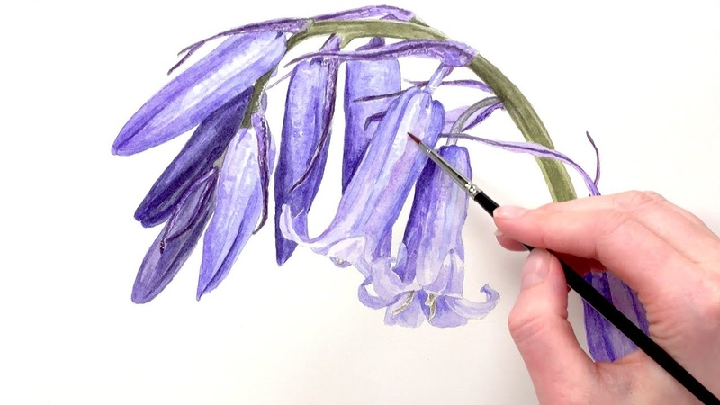 How to paint iridescent bluebells in watercolour with Anna Mason