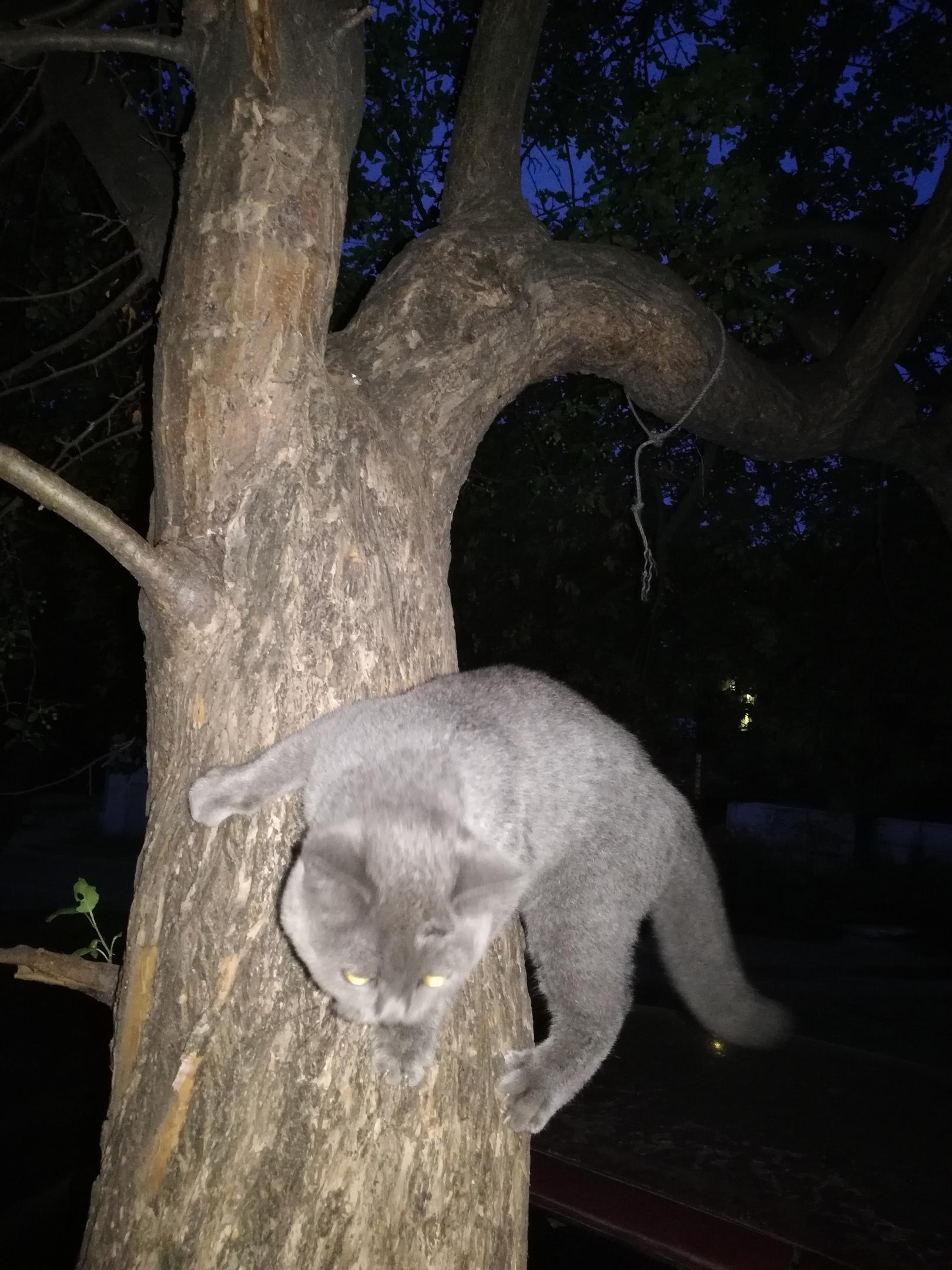 Найдена кошка на ул.