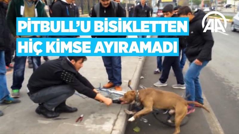 Anadolu Ajansı - Pitbullu bisikletten hiç kimse ayıramadı