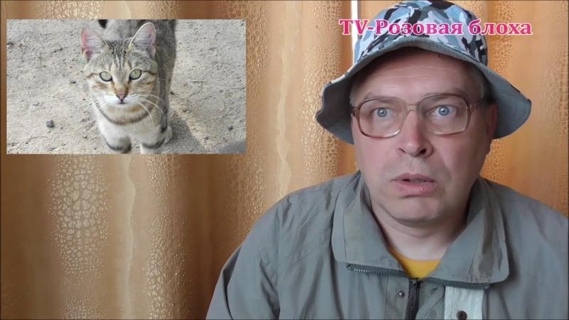 Человек в первый раз увидел кота
