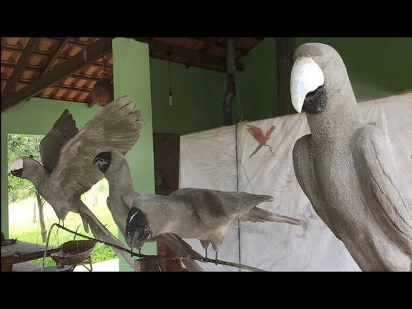 Escultura em concreto de arara - passo a passo (parte 1). Macaw Concrete statue - Step by Step