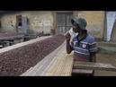Кот-д'Ивуар и Гана повышают цены на какао бобы