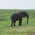 safaribook_evo video