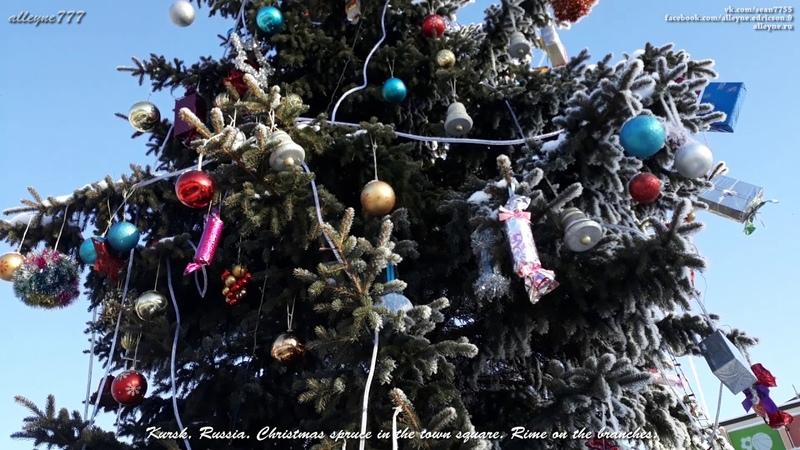 Курск, Россия. Новогодняя ель на площади города. Изморозь на ветвях.