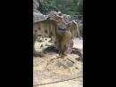 живые динозавры 3