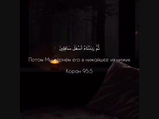 Quran - At tin