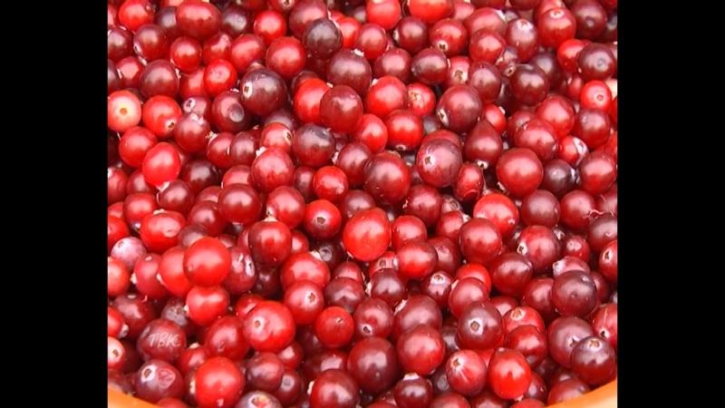 В Томской области установлены сроки заготовки дикоросов Однако специалисты прогнозируют невысокую урожайность ягод и ореха