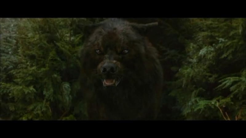 Сумерки..Волки и Вампиры, Клип!