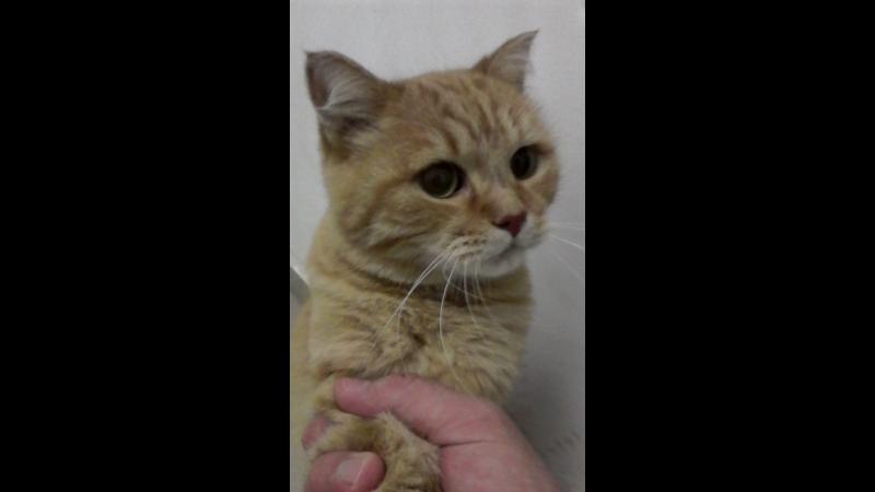 Чей кот/кошка потерялся/ась?