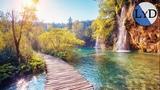 Música Relajante y Sonidos de la Naturaleza | Música de Relajación y Meditación | Música para Dormir
