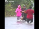 TO THE RESCUE ABC station reporter interrupts live stream to rescue dog chest deep in the flooded streets of New Bern, North Car