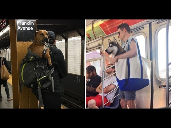 NYC Subway Bans Dogs Unless They Fit Into A Bag And New Yorkers' Solution Is Hilariously Clever