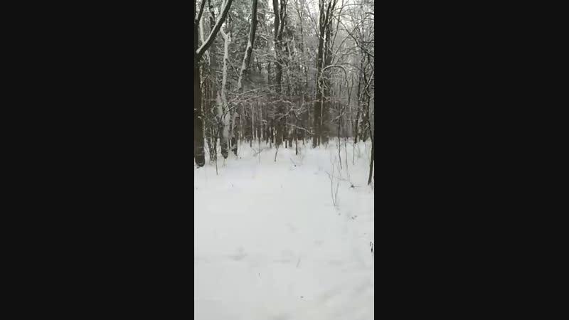 Москва места силы 11 Юго-западный лесопарк