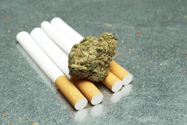 Коноплю будут добавлять в сигареты чтобы снизить вред от табакокурения.