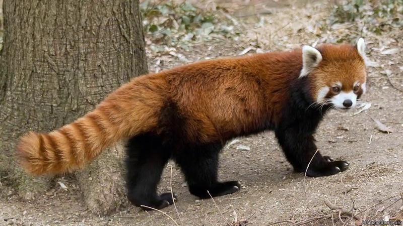 3 Горячие точки Гаолигуншань видео 3 Биоразнообразие