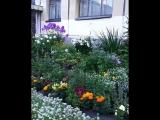 Вот..такой красивый двор на Курчатова 34..🍃🌹🌿🌷🍃