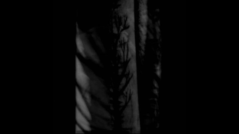 Left Alone... - With Black Branches... Scars And Wounds, The Painful Memories... (Demo) (2016)