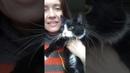 Ласковая кошка Жучка ищет дом Ей 9мес стерилизов Приют Петербург
