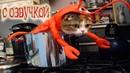 Приколы про котов с ОЗВУЧКОЙ животных – Угарные коты и кошки 2018 от Domi Show