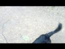 Веселая собака Дара - мой маленький пушистый друг