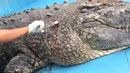 Crocodile injured by tourists with hurled stones at China zoo