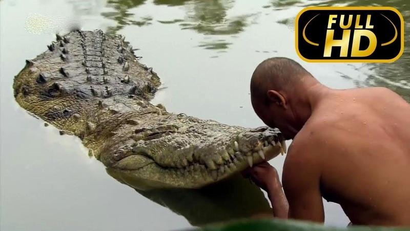 Дружба Крокодила с Человеком. Полная Версия / FULL HD - Док. Фильм на Amazing Animals TV