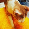 Alenka on Instagram Фениксу нравятся подушечки которые нам связала моя мама 😍😘🙊 cat mylovecat moscow catsofinstagram likeforlikes followfo