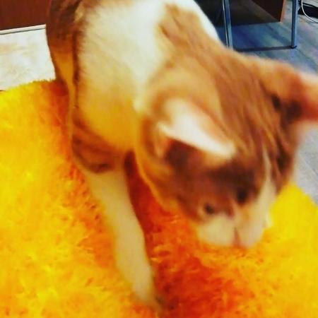"Alenka on Instagram: ""Фениксу нравятся подушечки, которые нам связала моя мама 😍😘🙊 cat mylovecat moscow catsofinstagram likeforlikes followfo..."