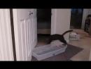 Кот открывает двери.