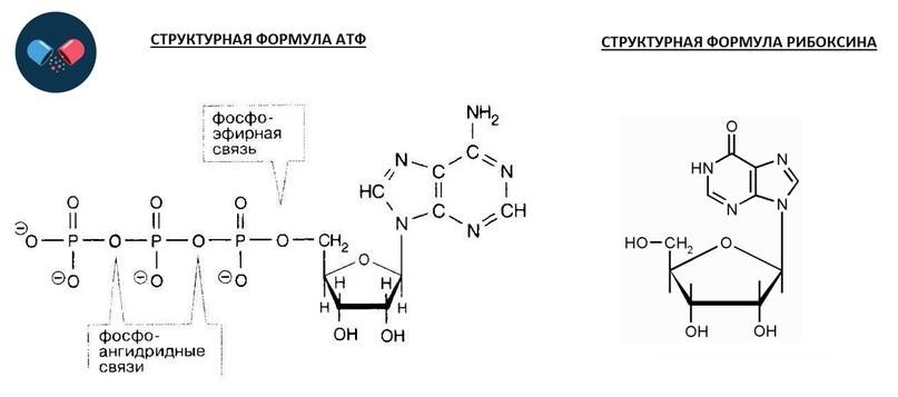 Структурная связь между АТФ и Рибоксином