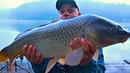 Рыбалка с ночевкой! Ловля трофейных карпов осенью! Готовлю ТАШКЕНТСКИЙ ПЛОВ с салом! Часть 1