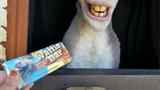 I gave Shrek's Donkey a waffle bar from Universal Studios Hollywood!