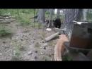 Домашний кот загнал медведя на дерево