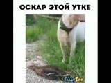 НЕСИТЕ ОСКАР