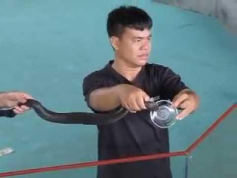 139 Вьетнам Нячанг путешествие экзотика змеиная ферма Vietnam Nha Trang crocodile elephant