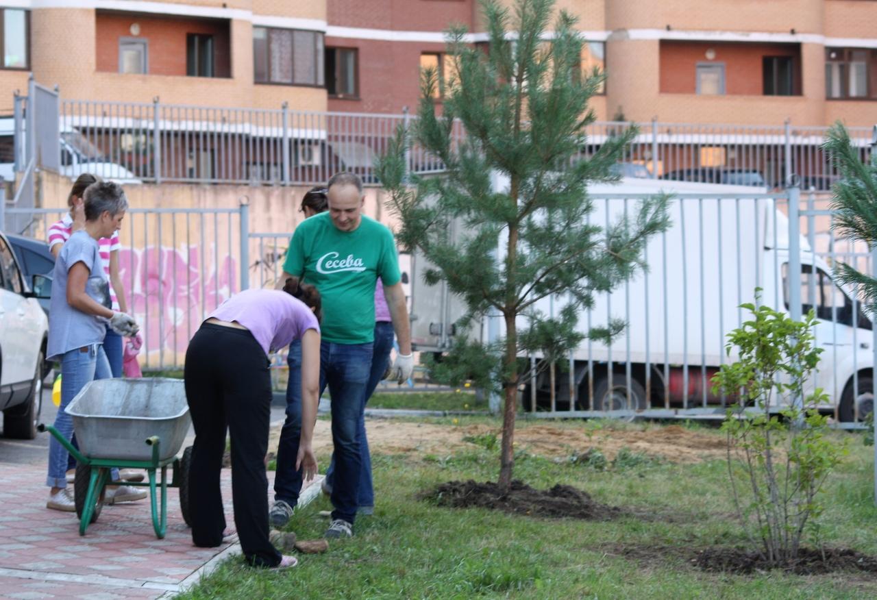 Более 40 тыс. деревьев посадили в Дмитровском округе в рамках акции «Посади свое дерево»