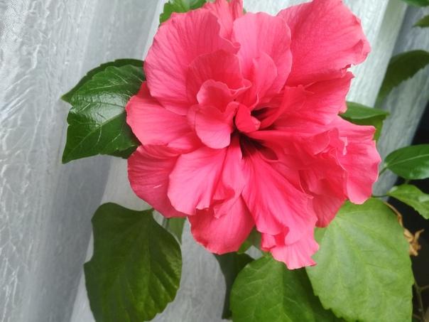 Цветущие комнатные растения, которые преобразят ваш дом!