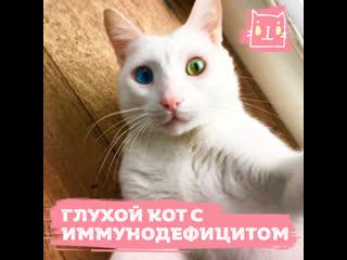 Куклас — глухой кот с вирусом иммунодефицита