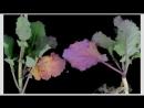Выращивание огурцов в открытом грунте - Все секреты в одном видео_low.mp4