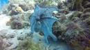 Interesting Octopus Display During Daytime Dive || ViralHog