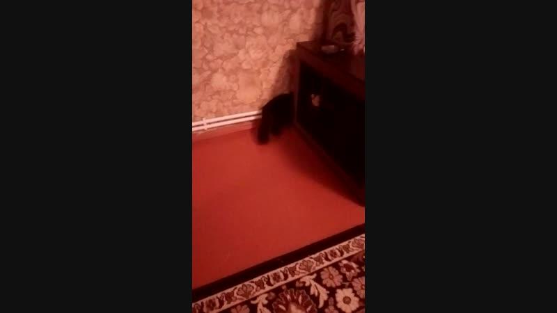 Дашкиной Ларины видео