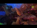 Царство кораллов _⁄ Coral Kingdoms